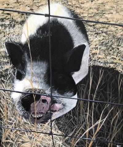 Friendly Pig